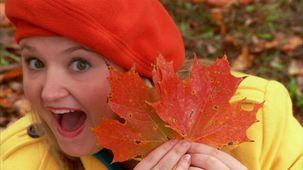 Vidéo - C'est l'automne : Les feuilles d'érable
