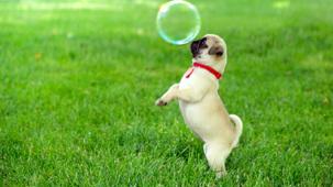 Vidéo - Les bulles