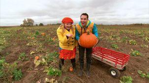 Vidéo - C'est l'automne : La citrouille