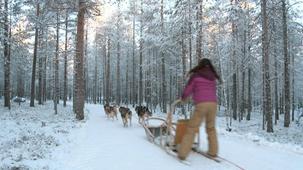 Vidéo - Les animaux - les huskies