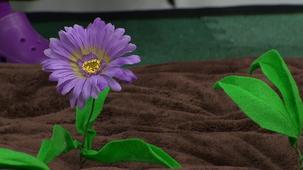 Vidéo - Fleurette jardine : Niveler