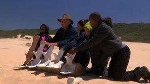 Vidéo - À la recherche des Sept Grands : une baleine d'autrefois