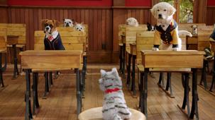 Vidéo - L'académie des chatons