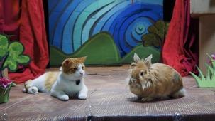 Vidéo - Le lion et le rat
