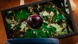 Vidéo - Mission : fruits et légumes - La caïmite et son secret