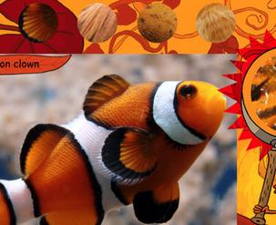 Site web - Le zoomzoom des animaux oranges