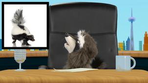 Vidéo - Super animaux : Moufette