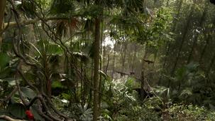 Vidéo - Les merveilles  - la forêt