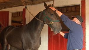 Vidéo - Jacques Beaudoin: Equestrian Racing
