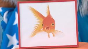 Vidéo - Le poisson rouge de Yéti
