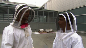 Vidéo - Beekeeper for one day