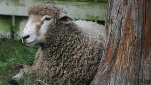 Vidéo - Top 6: Farm Animals