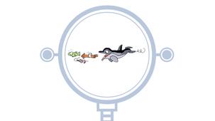 Vidéo - Le dauphin