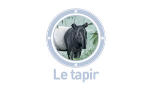 Vidéo - Le tapir