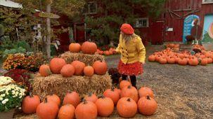 Vidéo - C'est l'automne : La blague