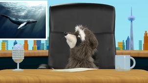 Vidéo - Super animaux : Baleine