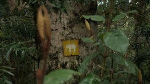 Vidéo - La route des jardins : la forêt enchantée