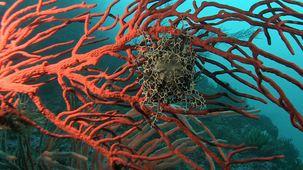 Vidéo - Le cap de Bonne-Espérance : sous la mer