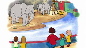Vidéo - Les éléphants