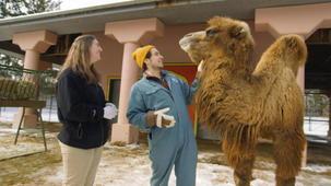 Vidéo - Accès interdit: Zoo de Toronto