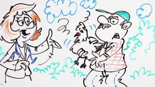 Vidéo - Top 3 des métiers pour travailler avec les animaux