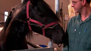 Vidéo - Vétérinaire pour chevaux