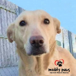 05 / 11 / 17 - 7 h - Muddy Paws Second Chance Rescue