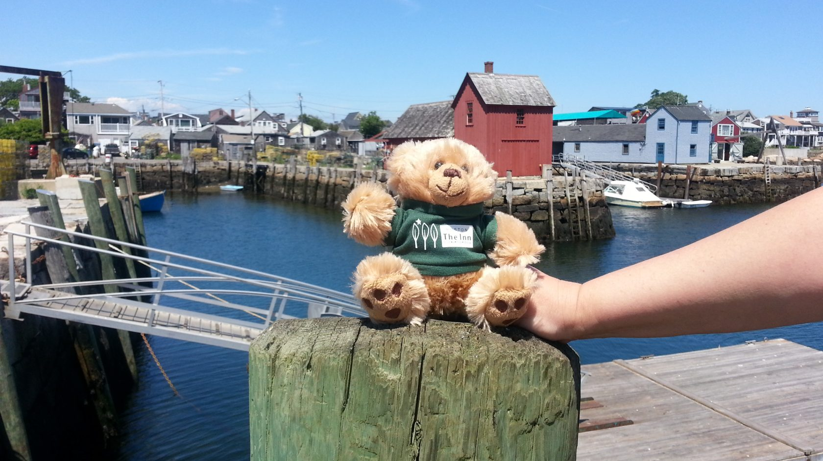 Hope the teddy bear in rockport near Inn at Longwood Medical