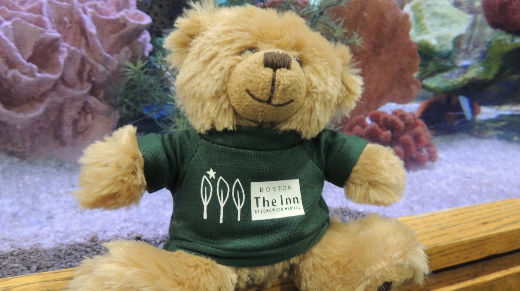 Hope the bear with Inn at Longwood medical shirt on