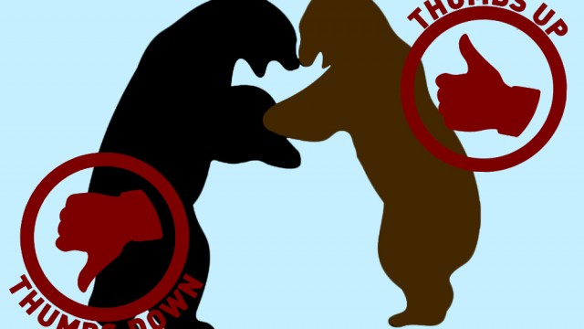 Union, Bears, And Celebrity Divorces