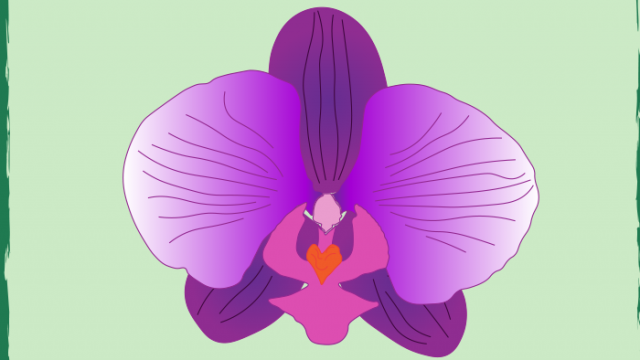 An Ode to the Orchid Man