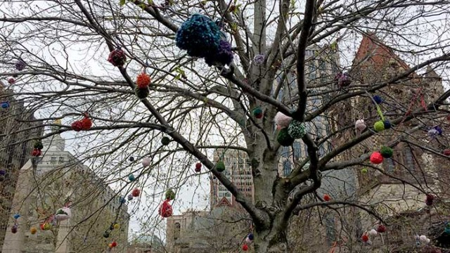 Finding Spring in the City: The Blooming of the Pom-pom Tree