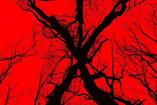 Soulless Sequel 'Blair Witch' Left Wandering in the Woods