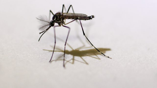 The Implications of Zika and American Abortion Law