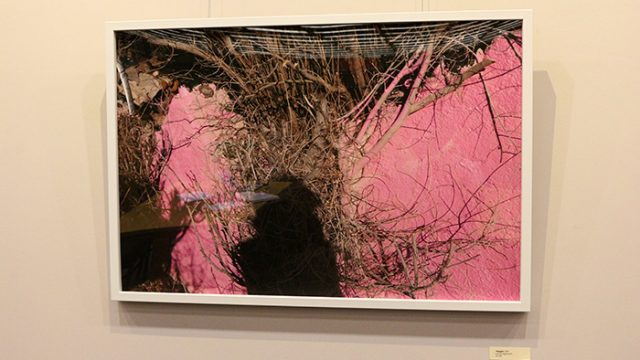 O'Neill Exhibit Uncovers the Shades of 'Pink' in Us All