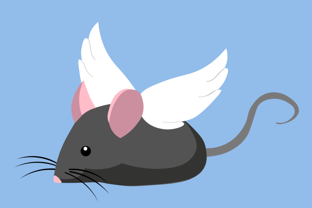 Freshmen and the Mouse: TU/TD