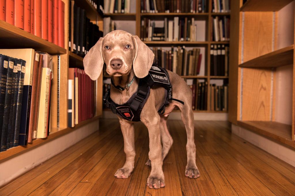 Meet Riley, MFA's Security Guard