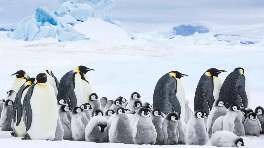 'March of the Penguins 2' Takes a Step Back