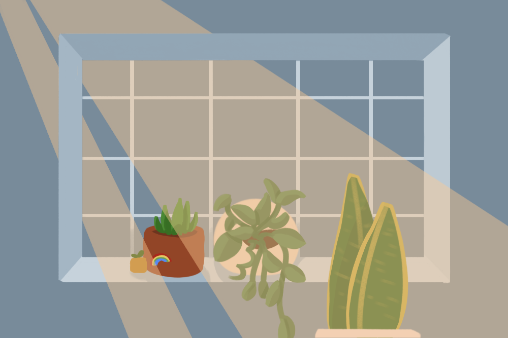Breathe Easy And Get A Houseplant