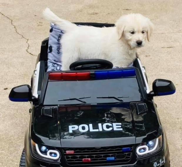 Community Resource Dog Joins Newton Police Department