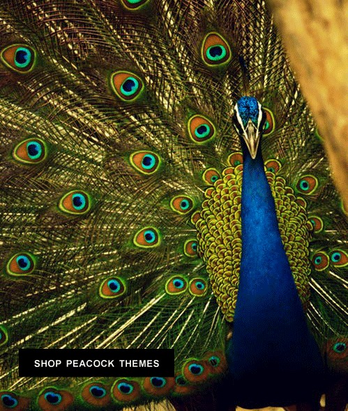 shop peacock wedding themes