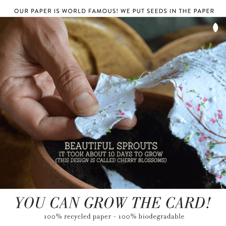 plantable seeded paper invitations