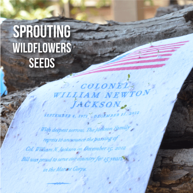 memorial announcement military sprouting seeds flowers