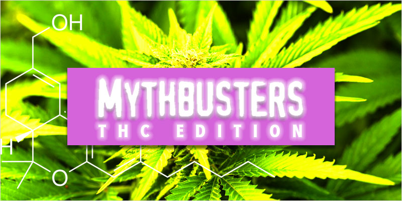 Common Myths Surrounding THC