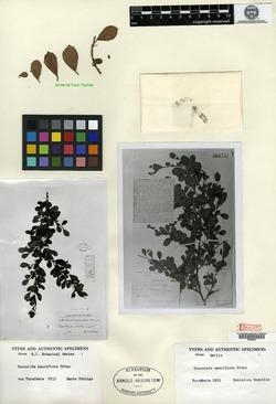 Image of Coccoloba pauciflora