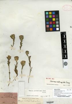 Perezia carthamoides image