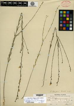 Image of Linum harperi
