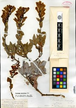 Image of Penstemon barrettiae