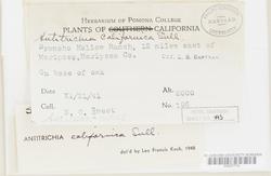 Antitrichia californica image