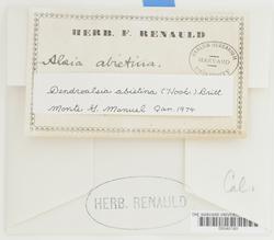 Dendroalsia abietina image